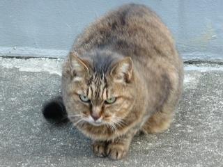 neko41 睨む猫